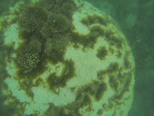 Massive hard coral with bleaching (HCB)